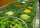Décryptage des bars à salades  - Vitrine d'un bar à salades