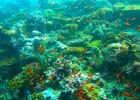 Le plus grand restaurant sous-marin est aux Maldives  - Les Maldives