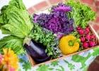 Manger des légumes : les impacts sur l'environnement  - Légumes