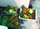 On vous sert les poubelles  - Denrées alimentaires recyclées
