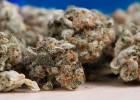 Un restaurant qui cuisine du cannabis légal a ouvert à Metz   - Chanvre