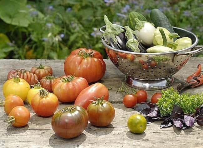 Tomates, navets et autres légumes