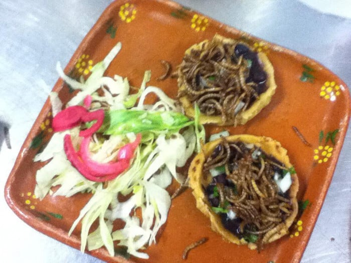 Plateau repas composé de plats d'insectes