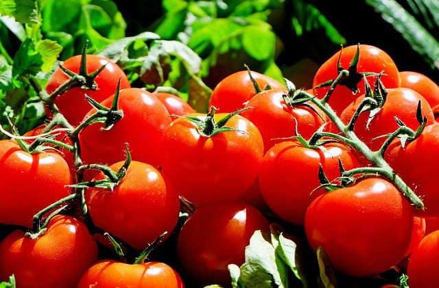 Festival de la tomate et des saveurs en septembre 2019