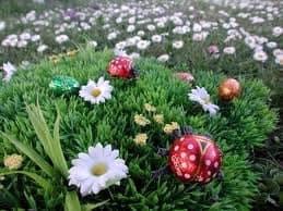 Chasse aux oeufs à Pâques
