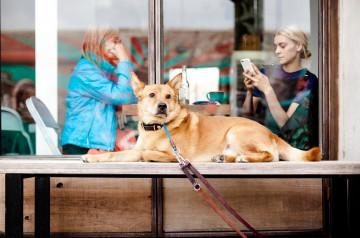 3 restaurants dog-friendly à Paris