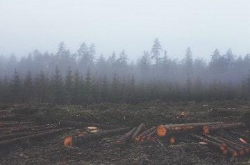 Burger King impliquée dans une histoire de déforestation ?