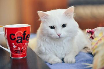 Des cafés pas comme les autres en France