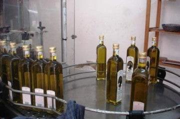 L'huile d'olive corse