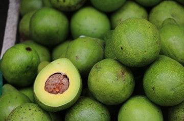 """La Guacamania, rendez-vous des """"avocado lovers"""" au Mexique"""