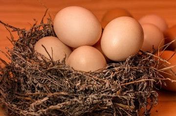 Vers la fin des œufs de poules en batterie ?