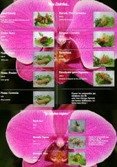 Menu L' Orchidée - Les entrées et plats à vapeur